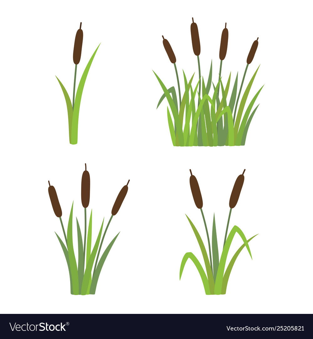 A set reeds in grass isolated on white