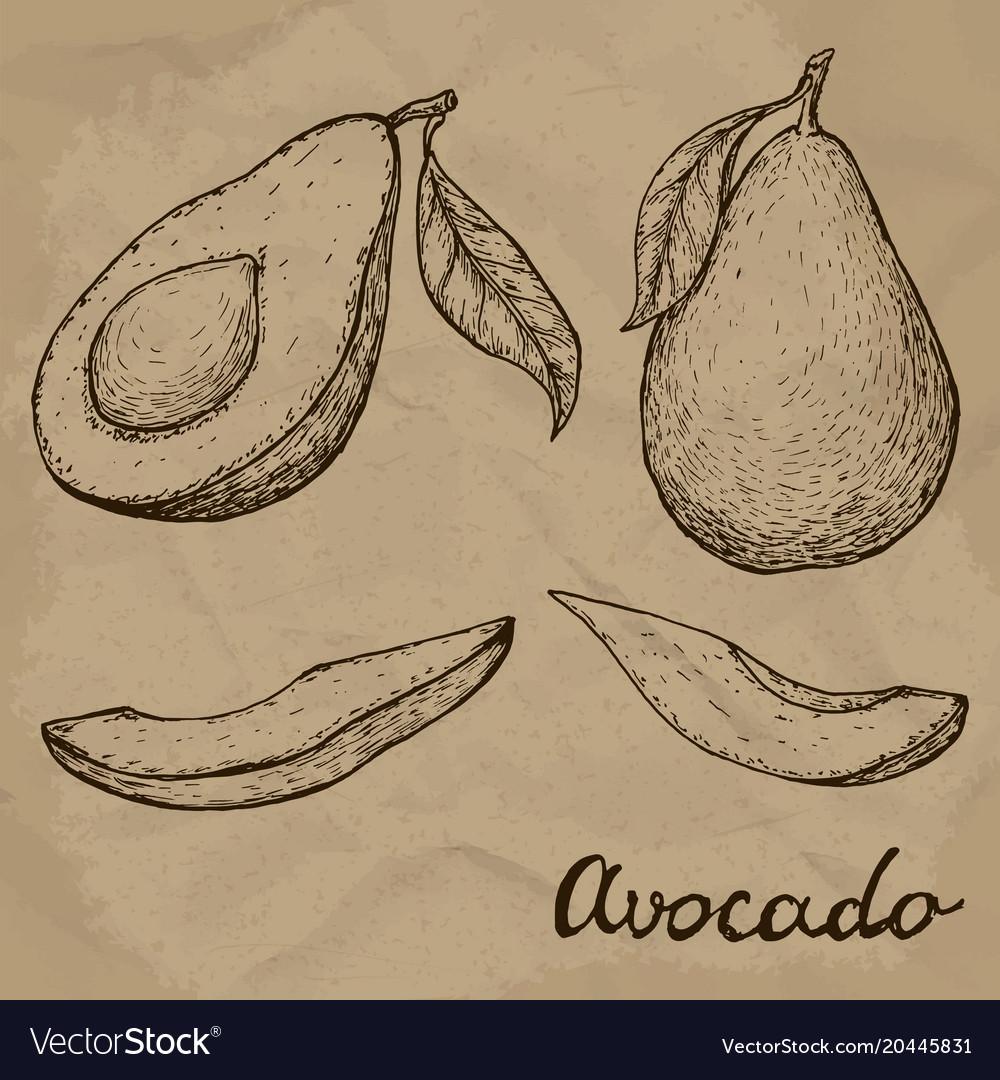 Hand drawn avocado set whole avocado sliced