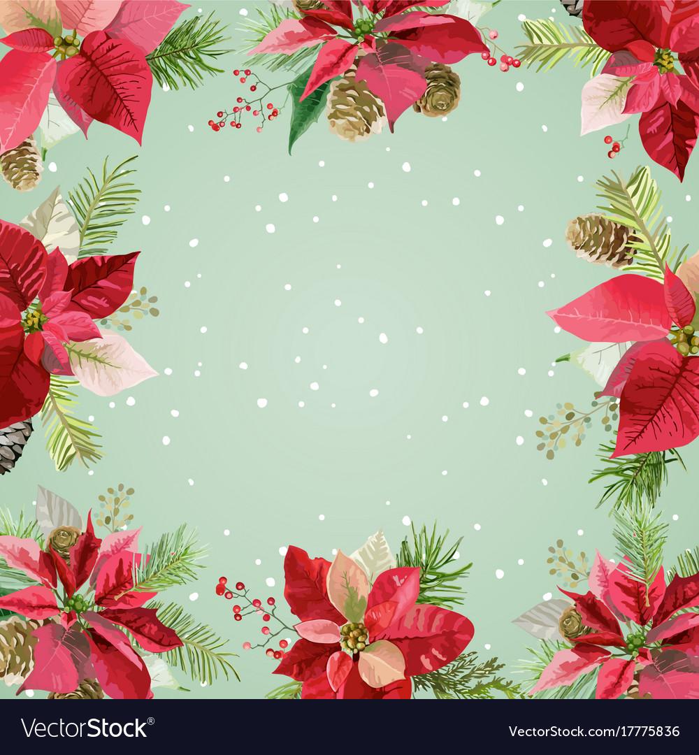 Christmas winter poinsettia flowers background