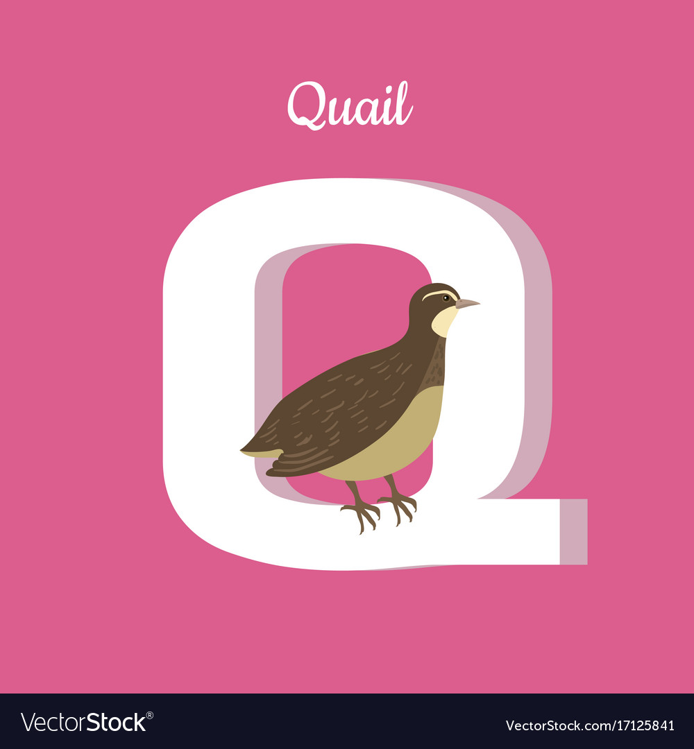 Animals alphabet letter - q Royalty Free Vector Image