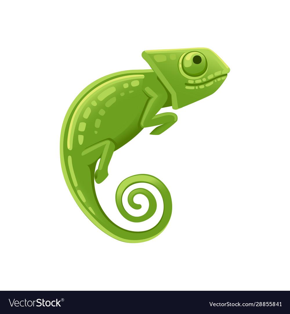 Cute Small Green Chameleon Lizard Cartoon Animal Vector Image,Sun Conure For Sale