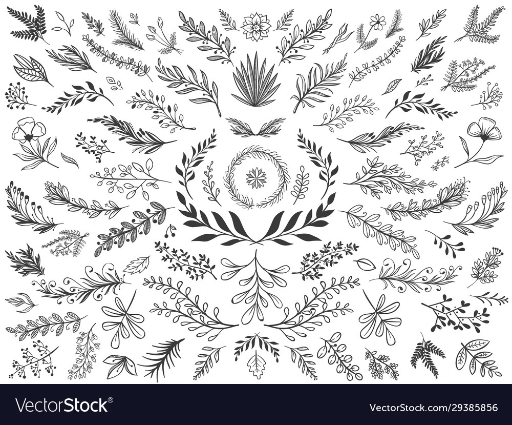 Hand drawn floral decor leaves sketch ornamental