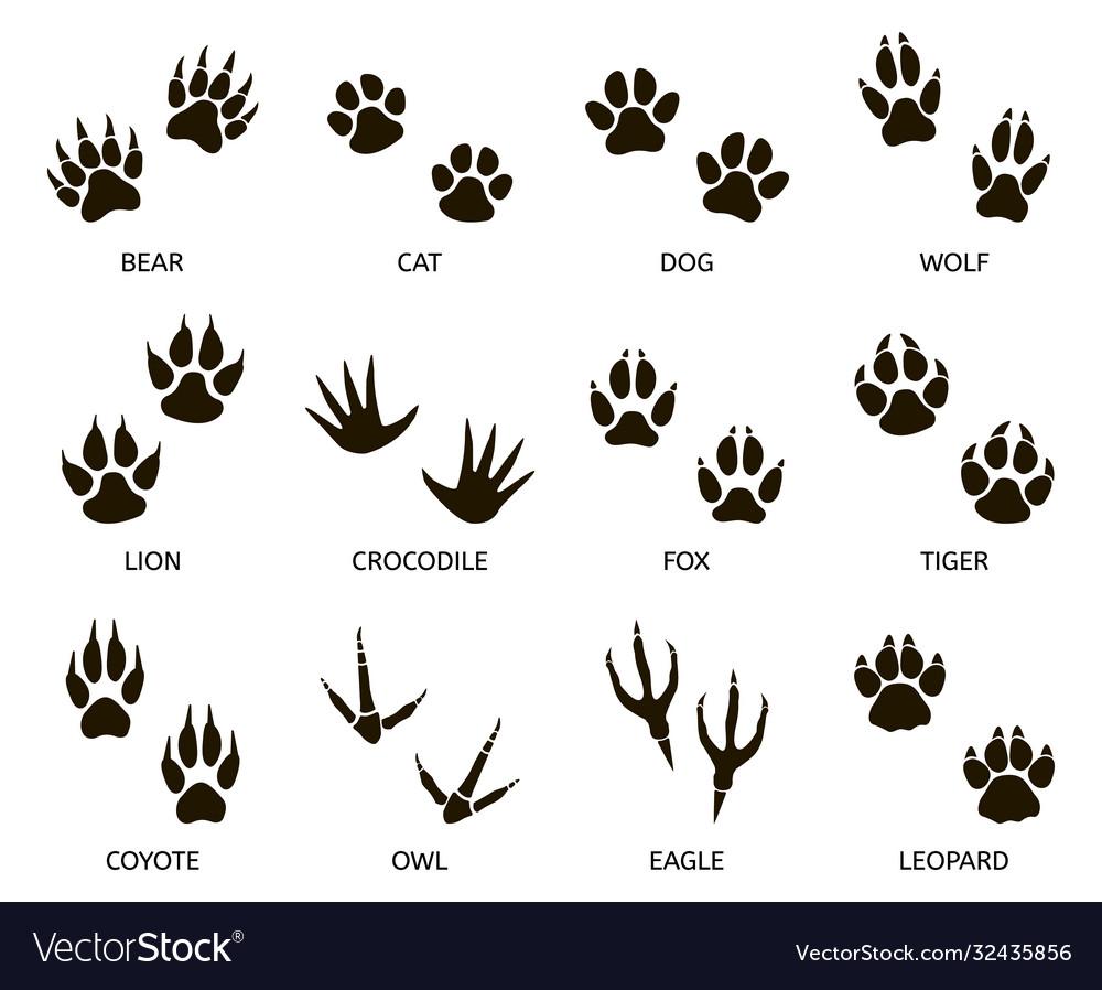 Predator footprint wild animals paw prints cat