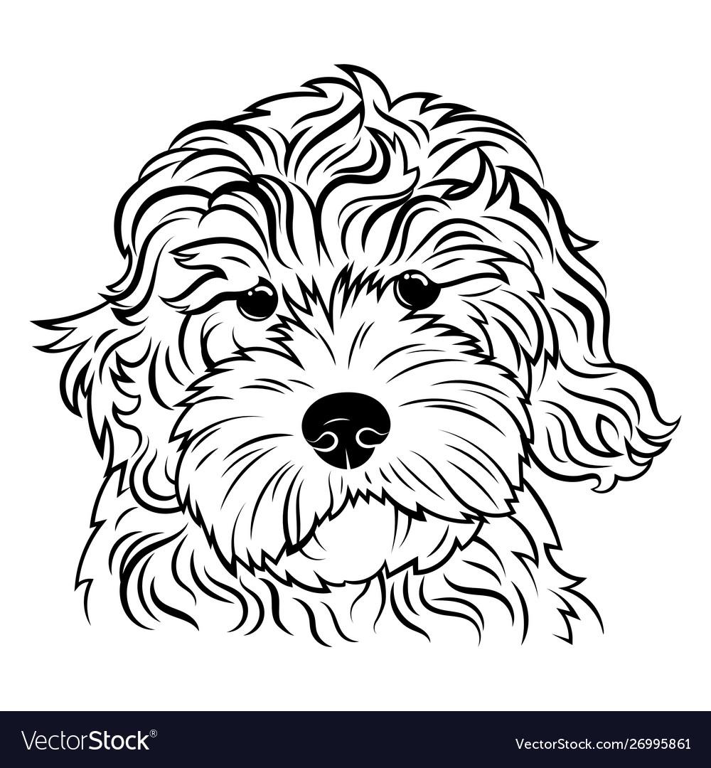 Portrait a dog portrait breed golden