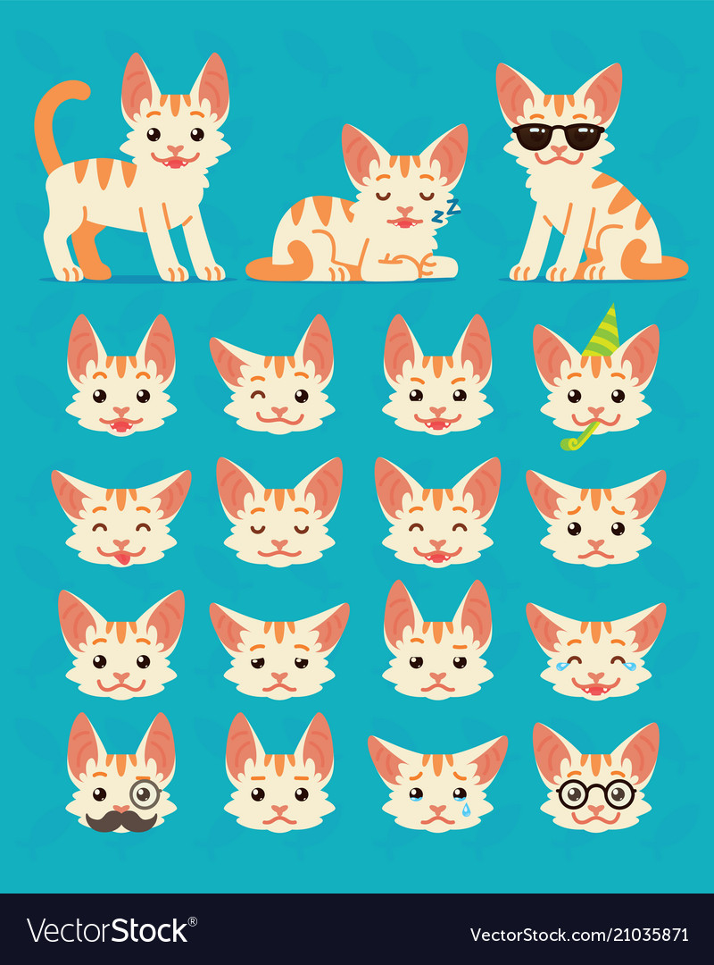 Cute cat in different poses and emotions