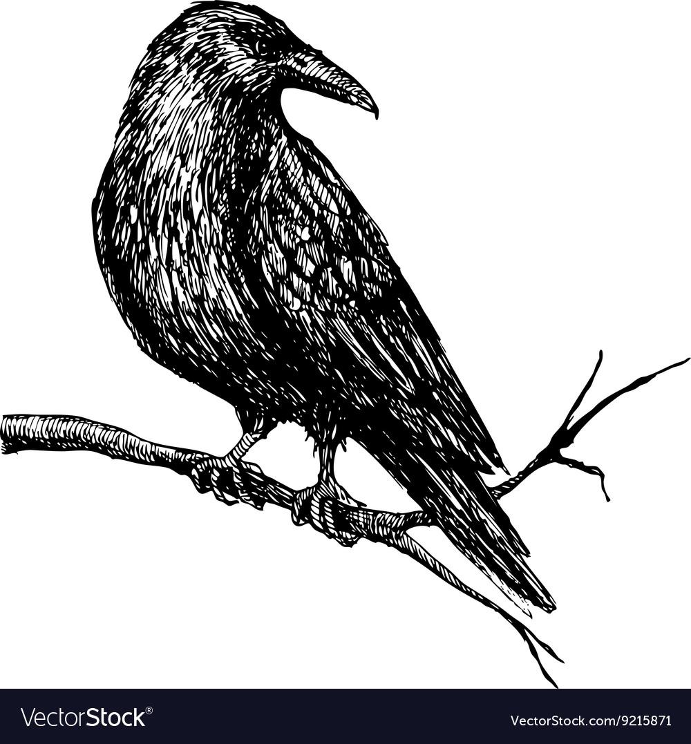 Vintage raven Hand drawn