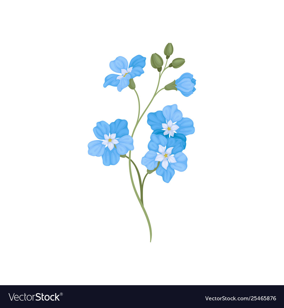 Five Small Blue Flowers On A Branch Royalty Free Vector