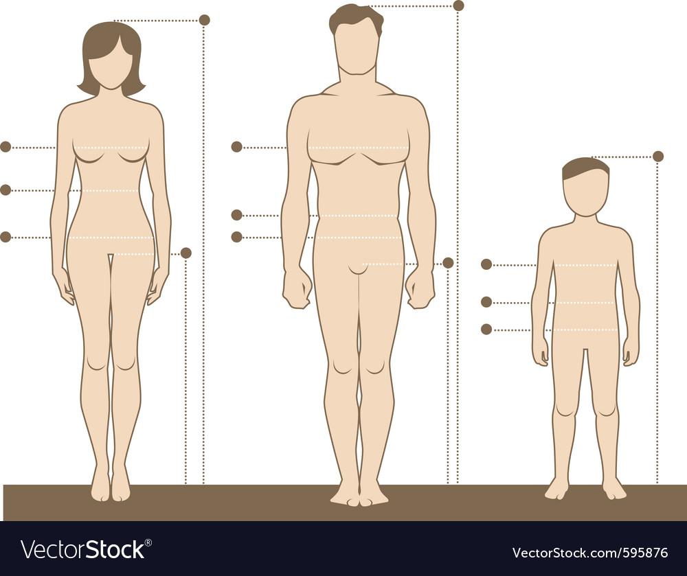 human body royalty free vector image vectorstock vectorstock