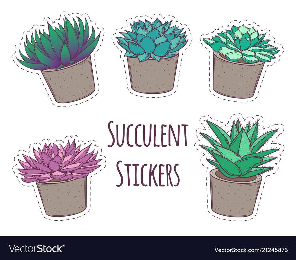 Set with a beautiful succulents cartoon
