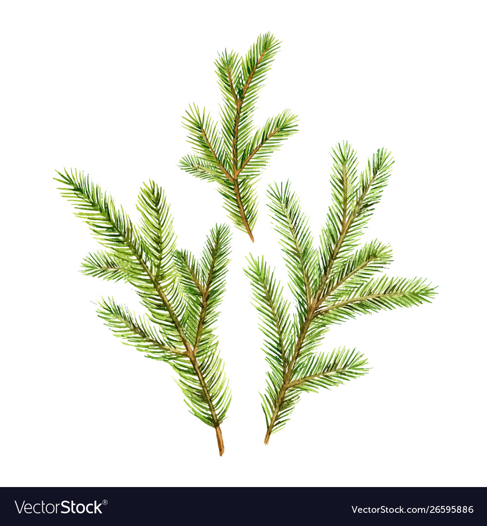 Christmas set with green fir branches vector