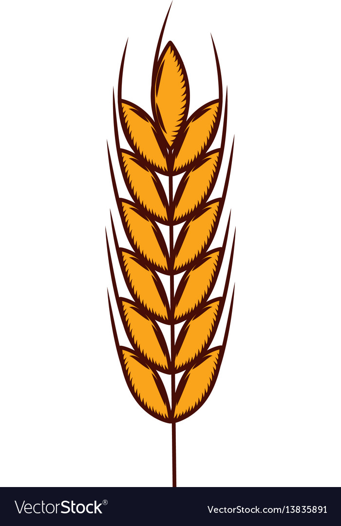 Wheat spike isolated icon