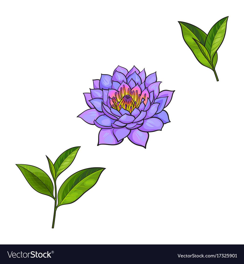 Sketch lotus flower tea leaves set royalty free vector image sketch lotus flower tea leaves set vector image izmirmasajfo