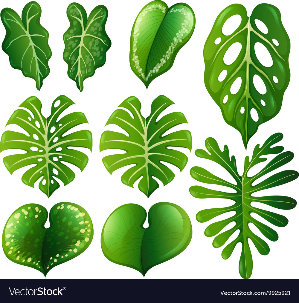 Set of different kinds of leaves vector image