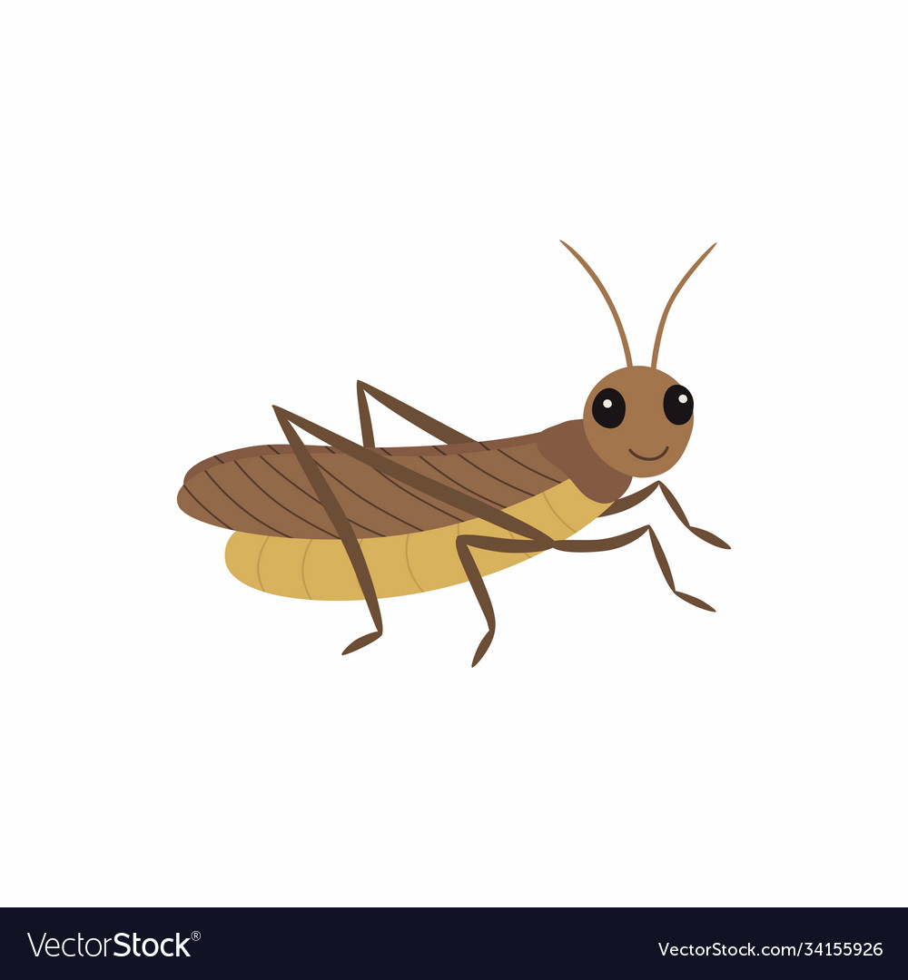 Locust isolated on white