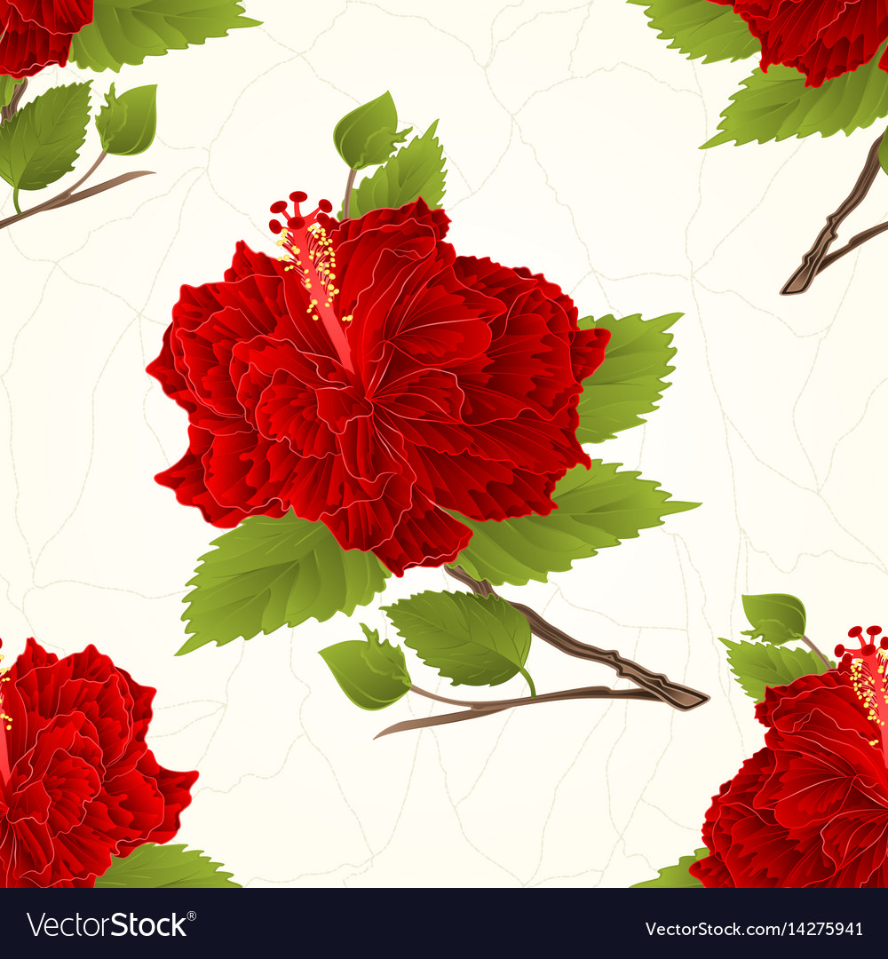 Seamless texture plant corrugated red hibiscus vector image