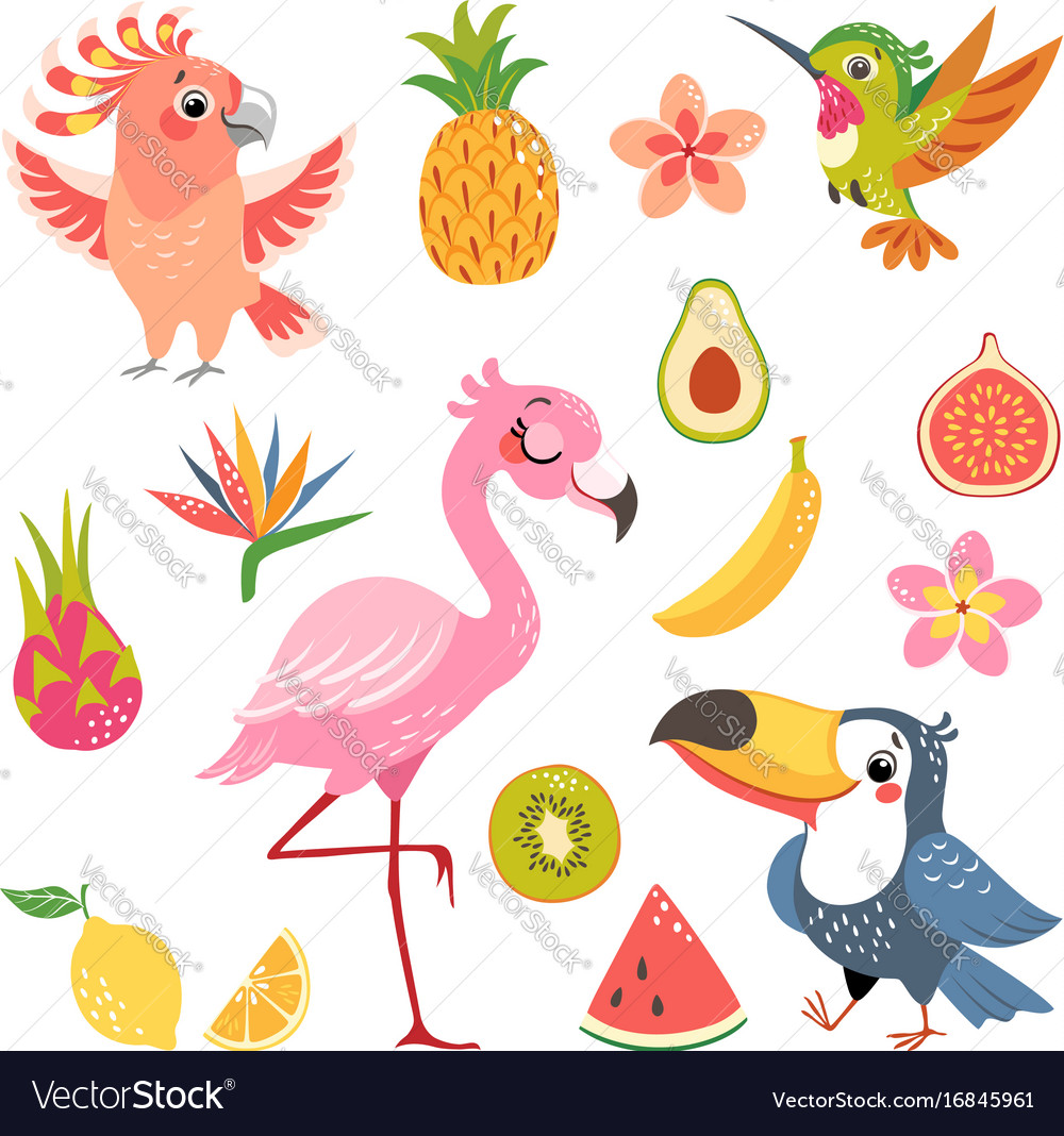 Tropical fruit and birds
