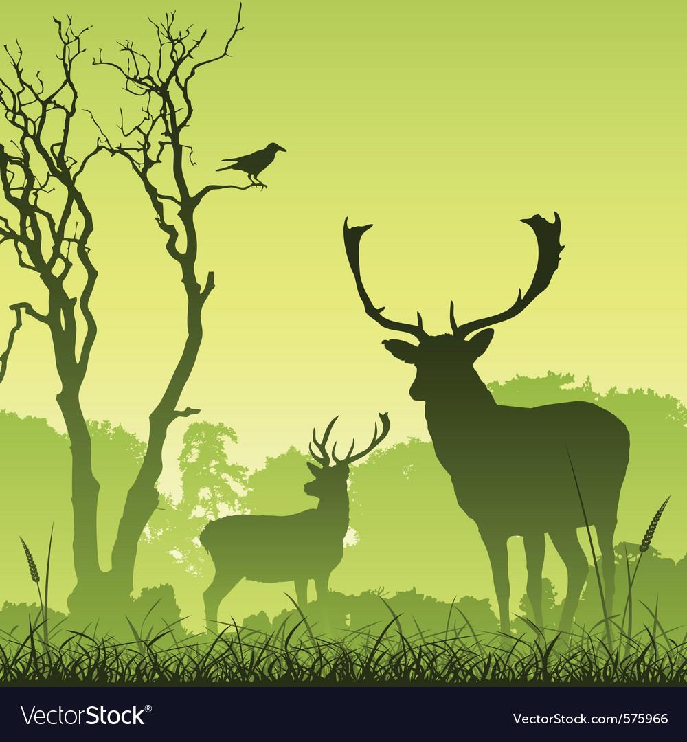 Stag deer vector image