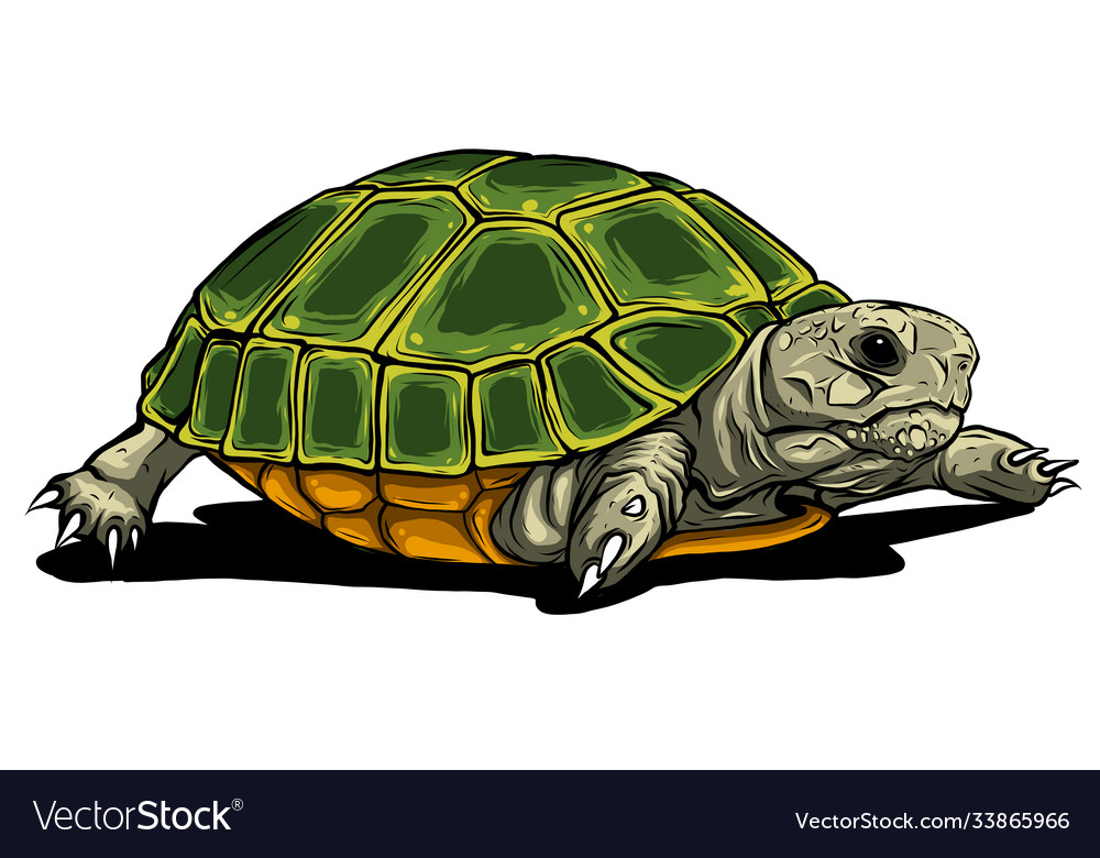 Turtle iconcartoon icon isolated on