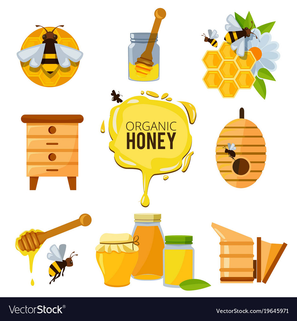 Colorful pictures of honey bumble and different