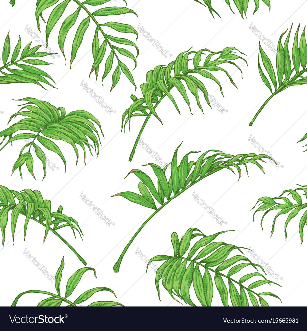 Hand drawn palm fronds pattern