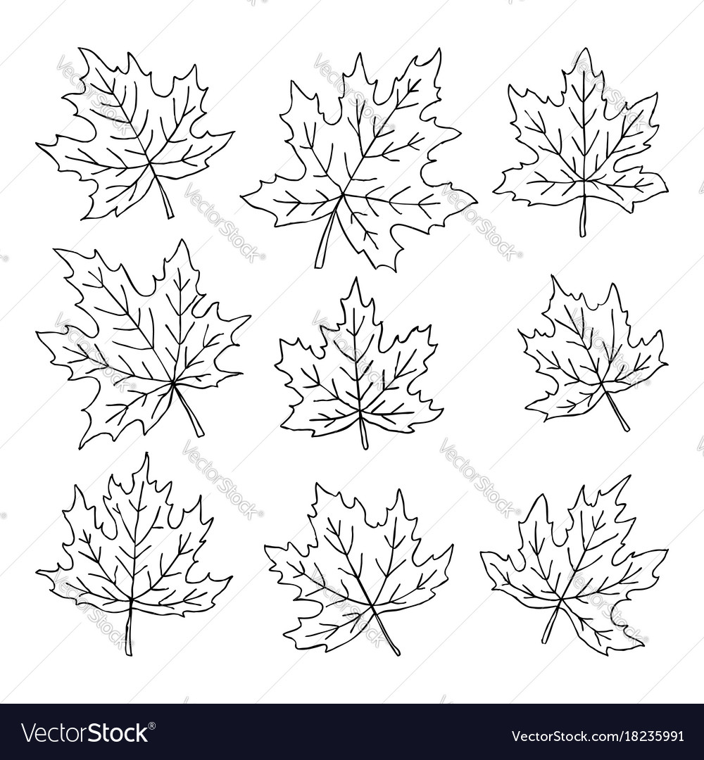 Beautiful set of doodle maple leaves isolated