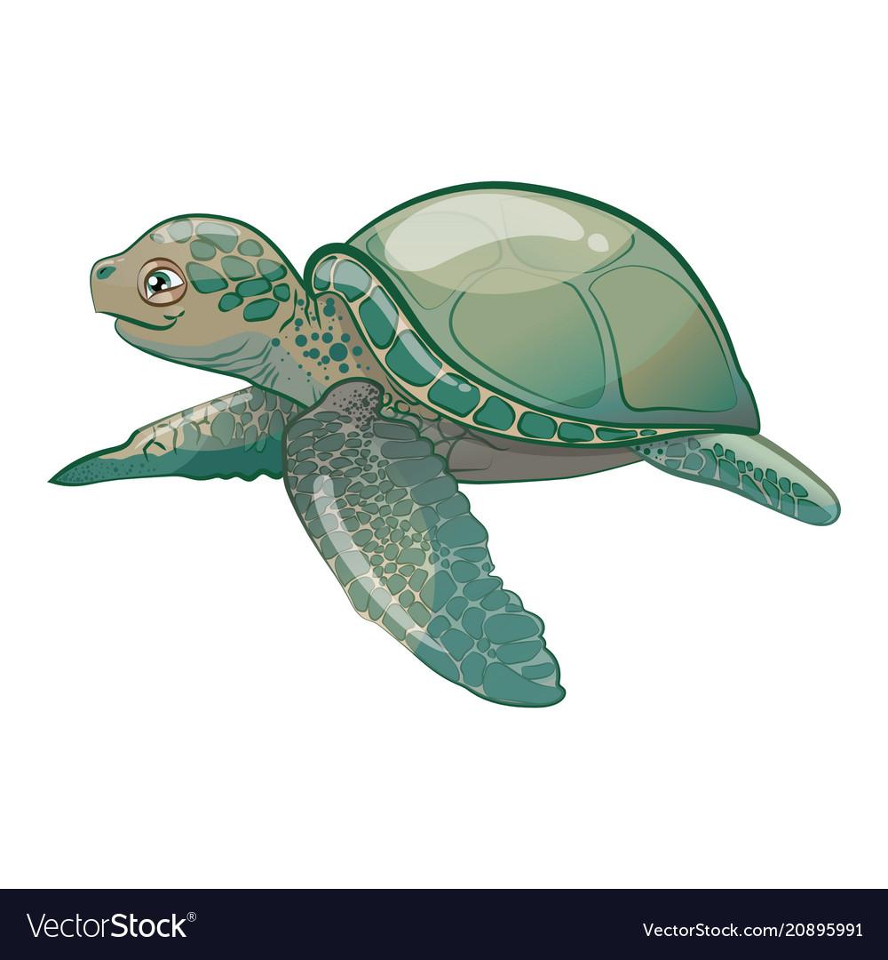 Cartoon sea turtle sweet turtle baby