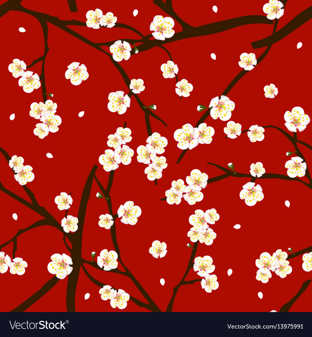 White plum blossom flower on red background vector image