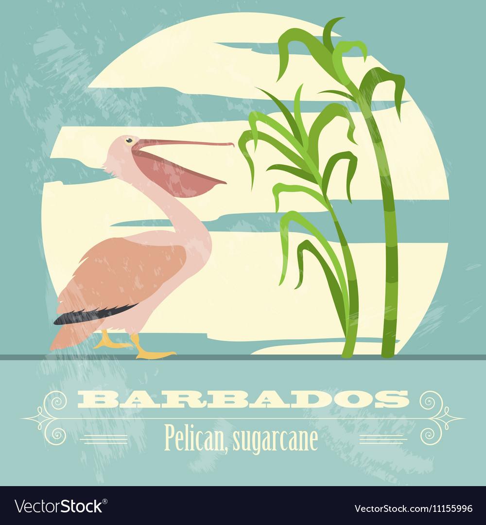 Barbados national symbols Pelican sugarcane Retro vector image