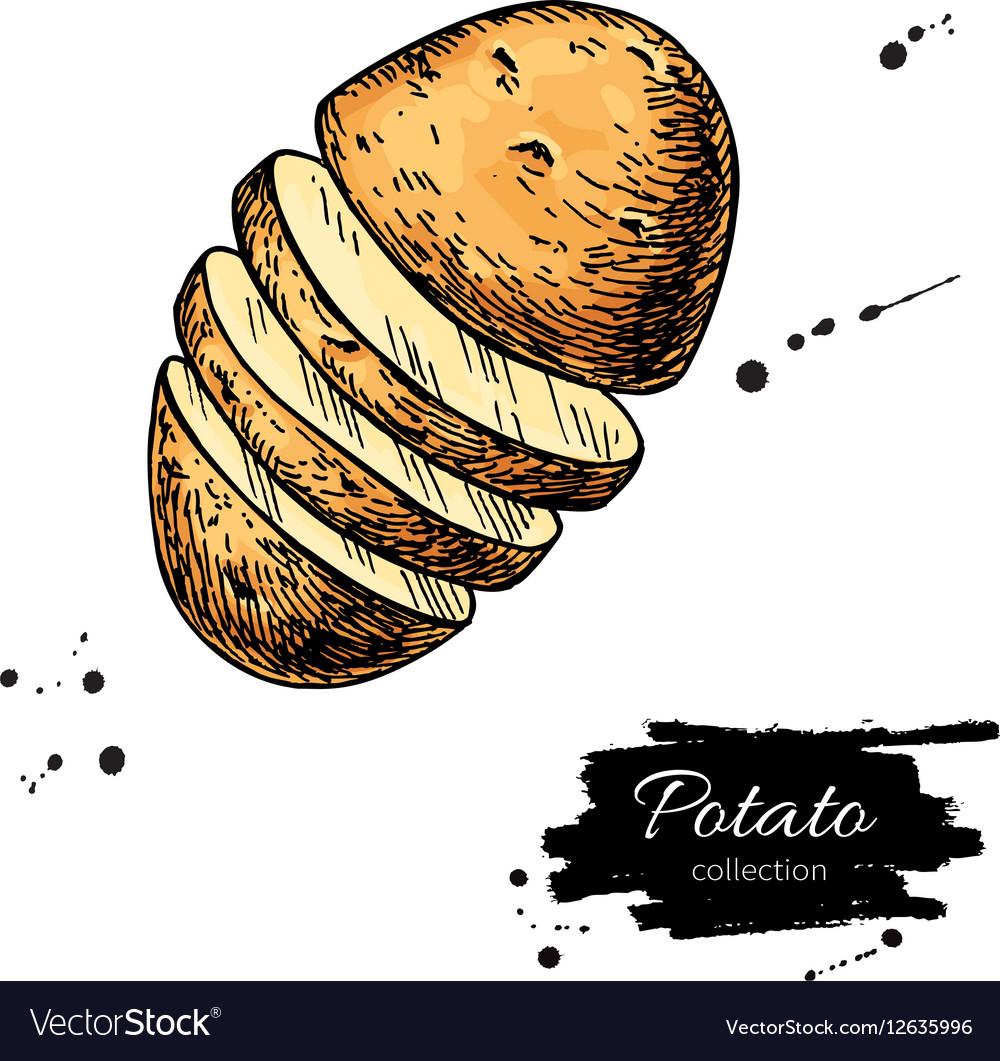 Potato Art Drawing