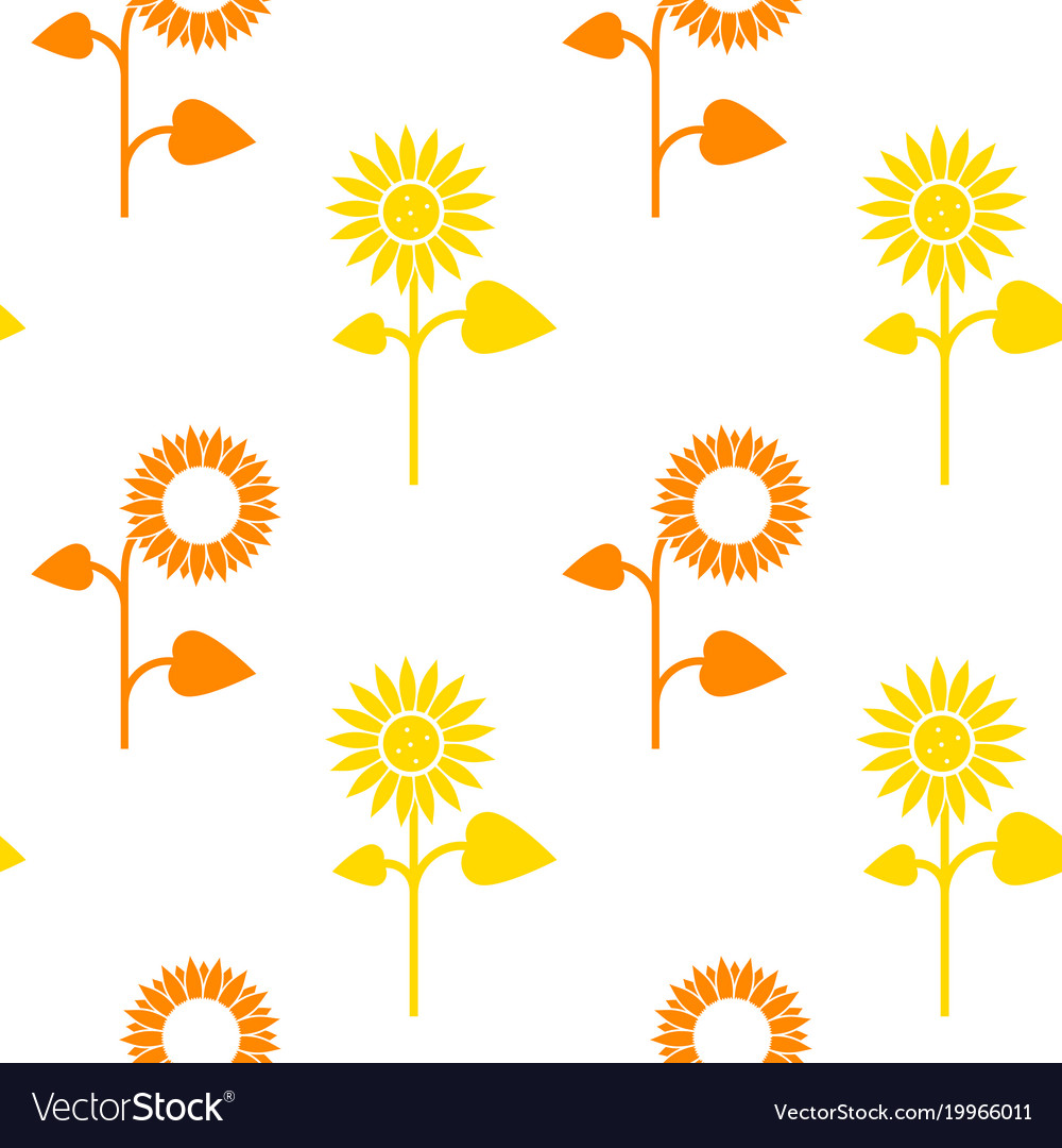 Seamless pattern of sunflowers on white vector image