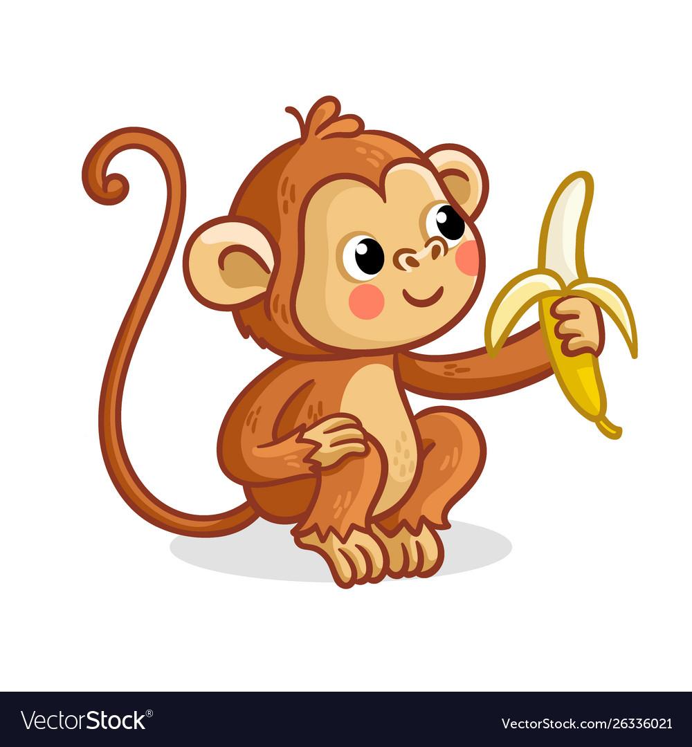 The monkey on a white background eats a banana