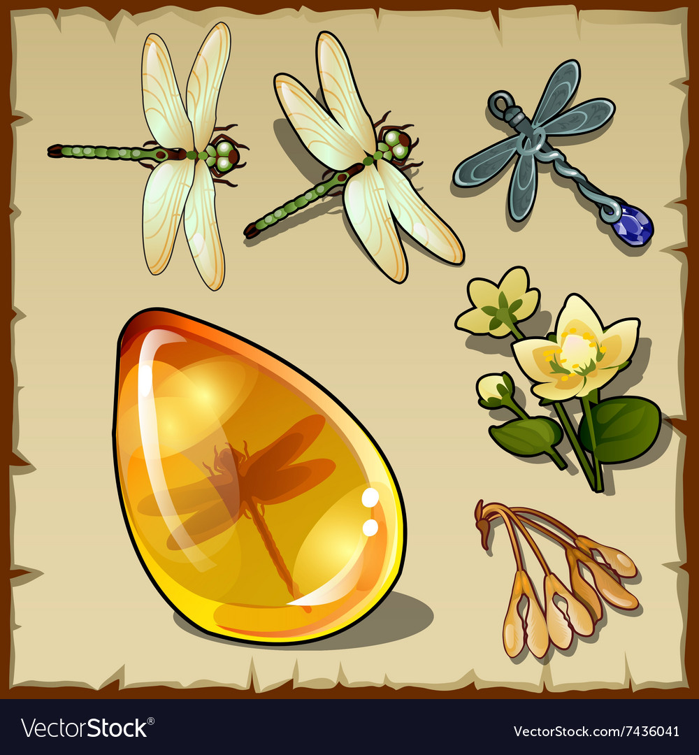 Symbols of summer plants dragonflies and amber