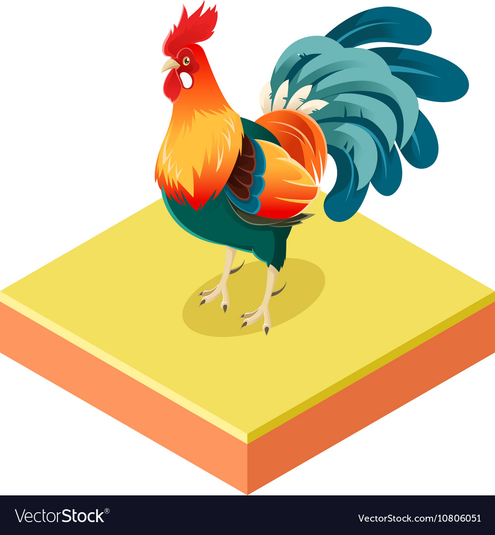 Isometric rooster o square ground