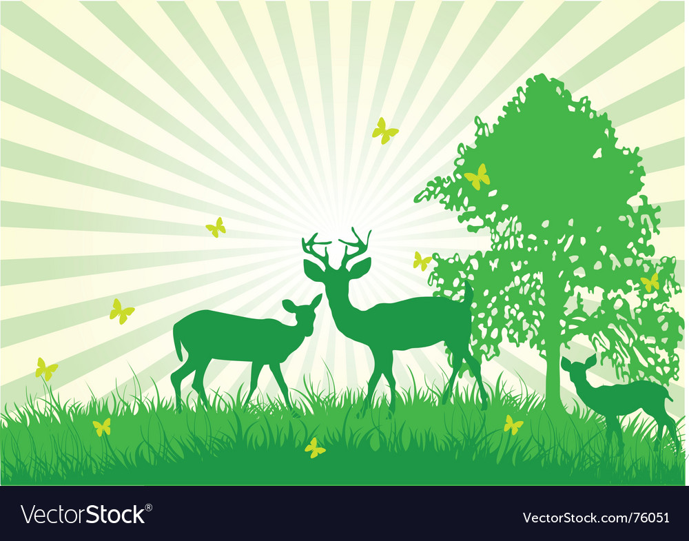 Wildlife in the country vector image