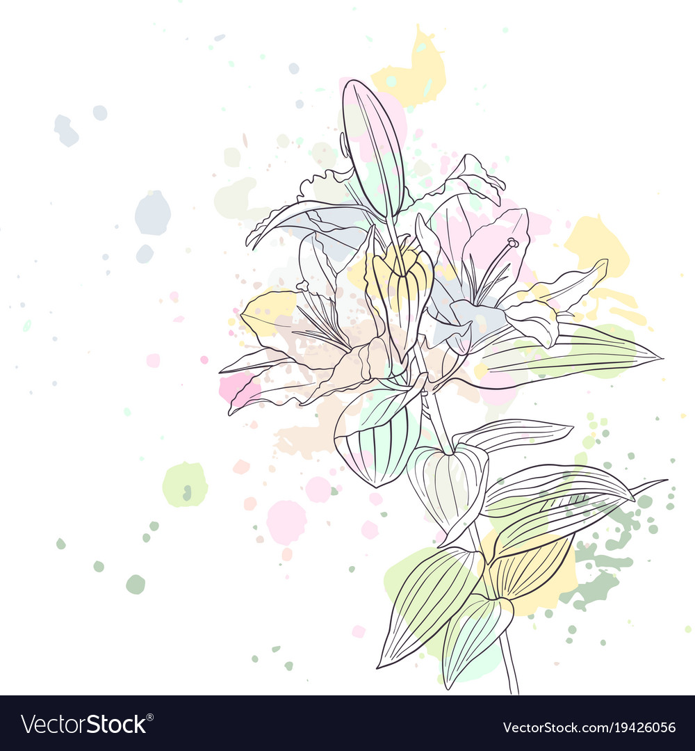 Drawing Lily Flower Royalty Free Vector Image Vectorstock