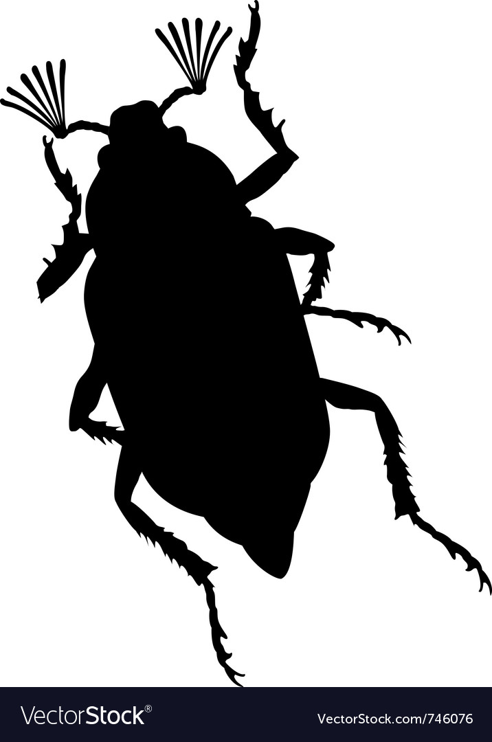 Maybug vector image