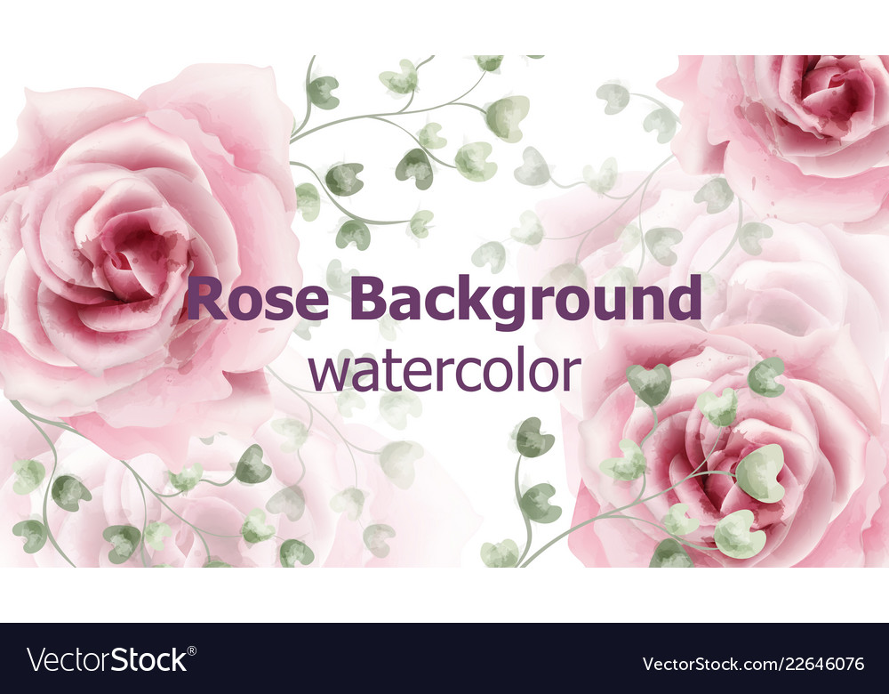 Rose flowers background watercolor