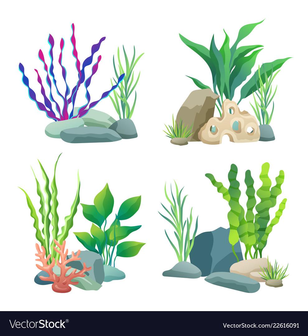 Водоросли в аквариум картинки для детей