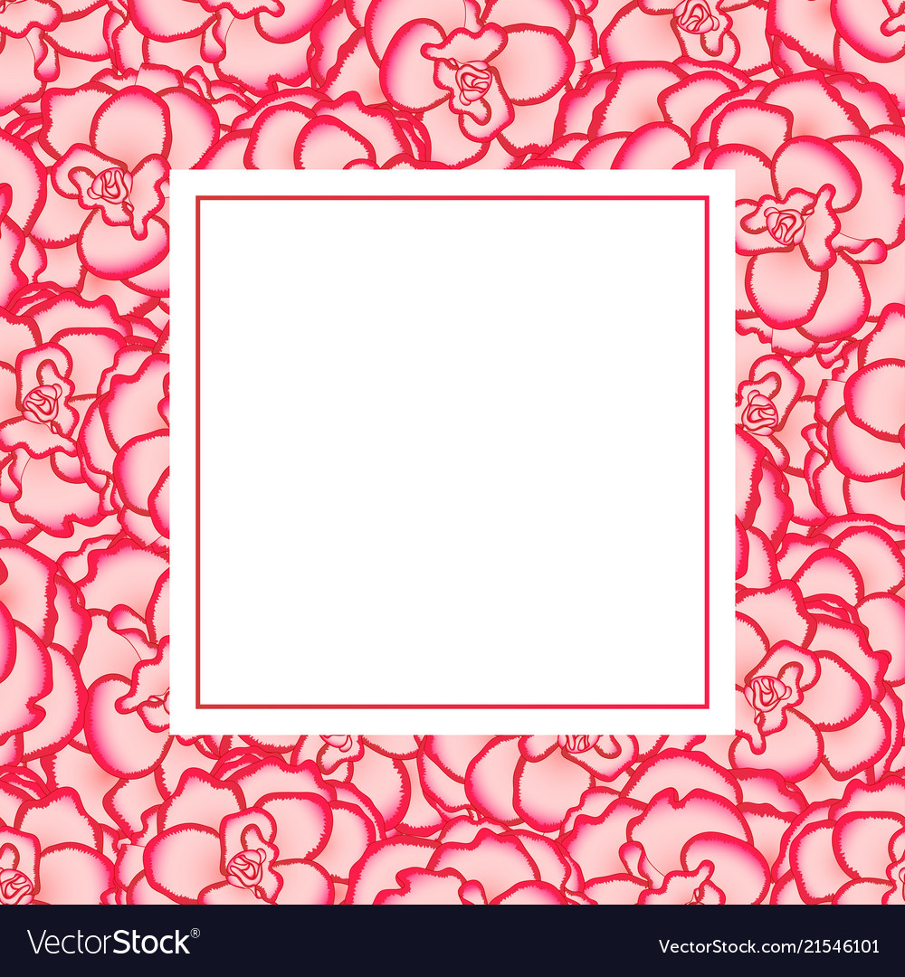 Pink begonia flower picotee first love banner card