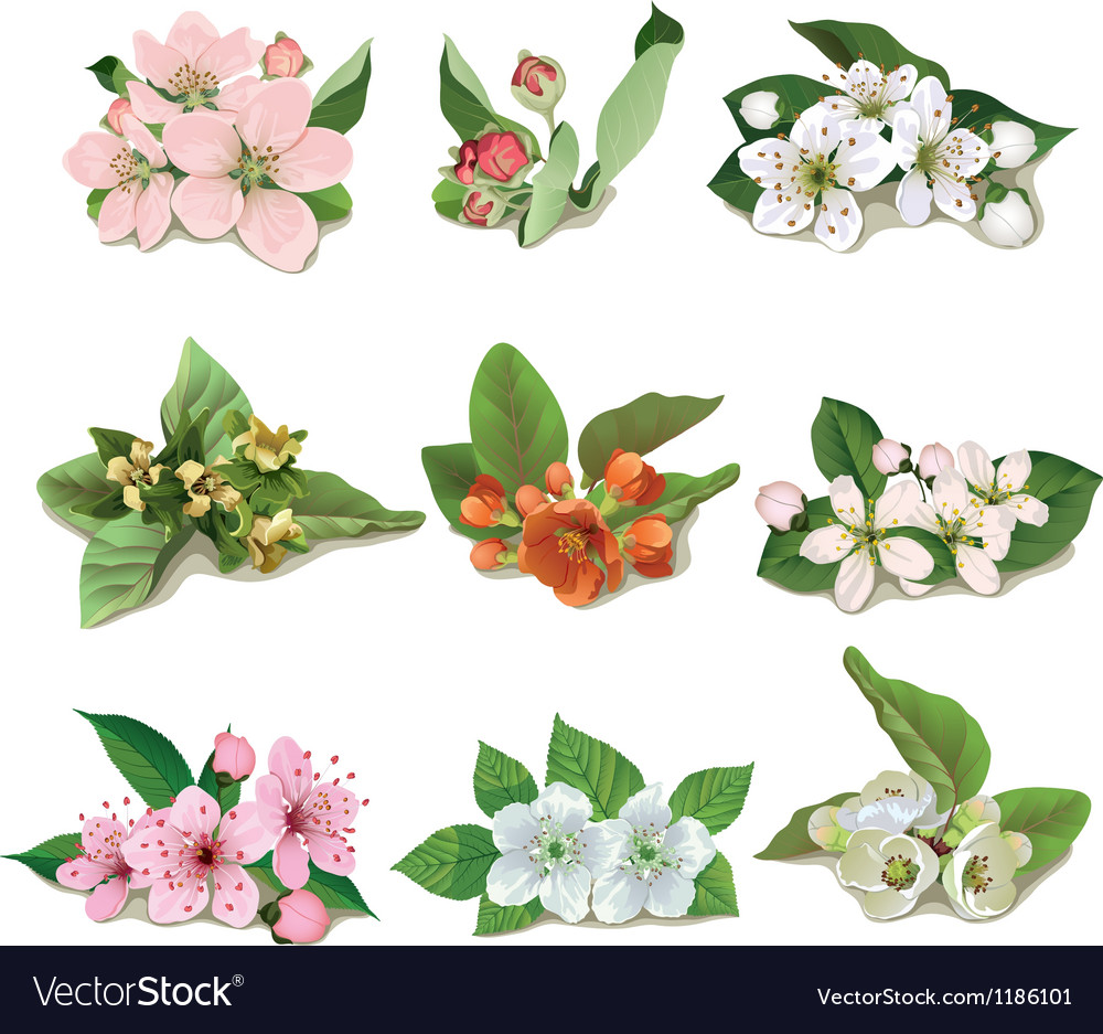 Set Of Flowers On Fruit Trees Royalty Free Vector Image