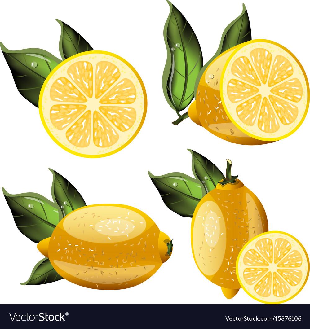 Fresh lemon fruits collection vector image