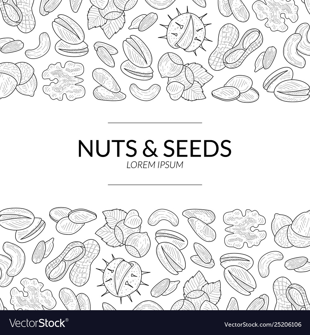 Nuts and seeds banner template natural tasty and