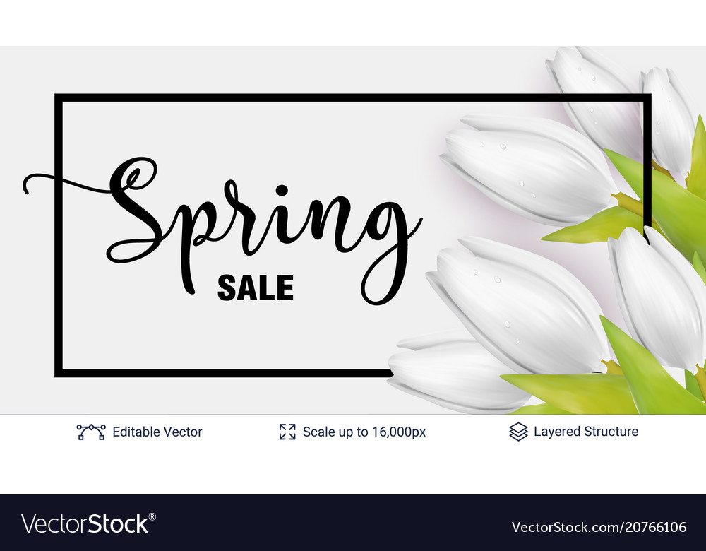 Spring season white tulips and sale text