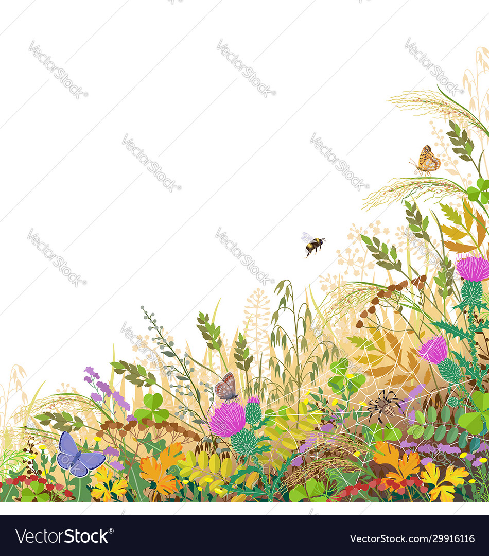 Colorful border with autumn meadow plants and