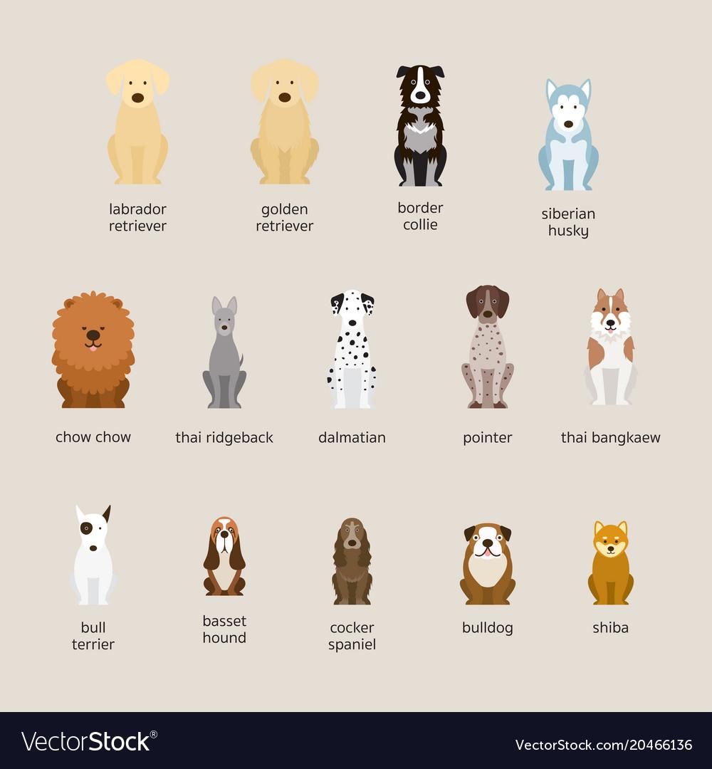 Dog breeds set large and medium size vector image