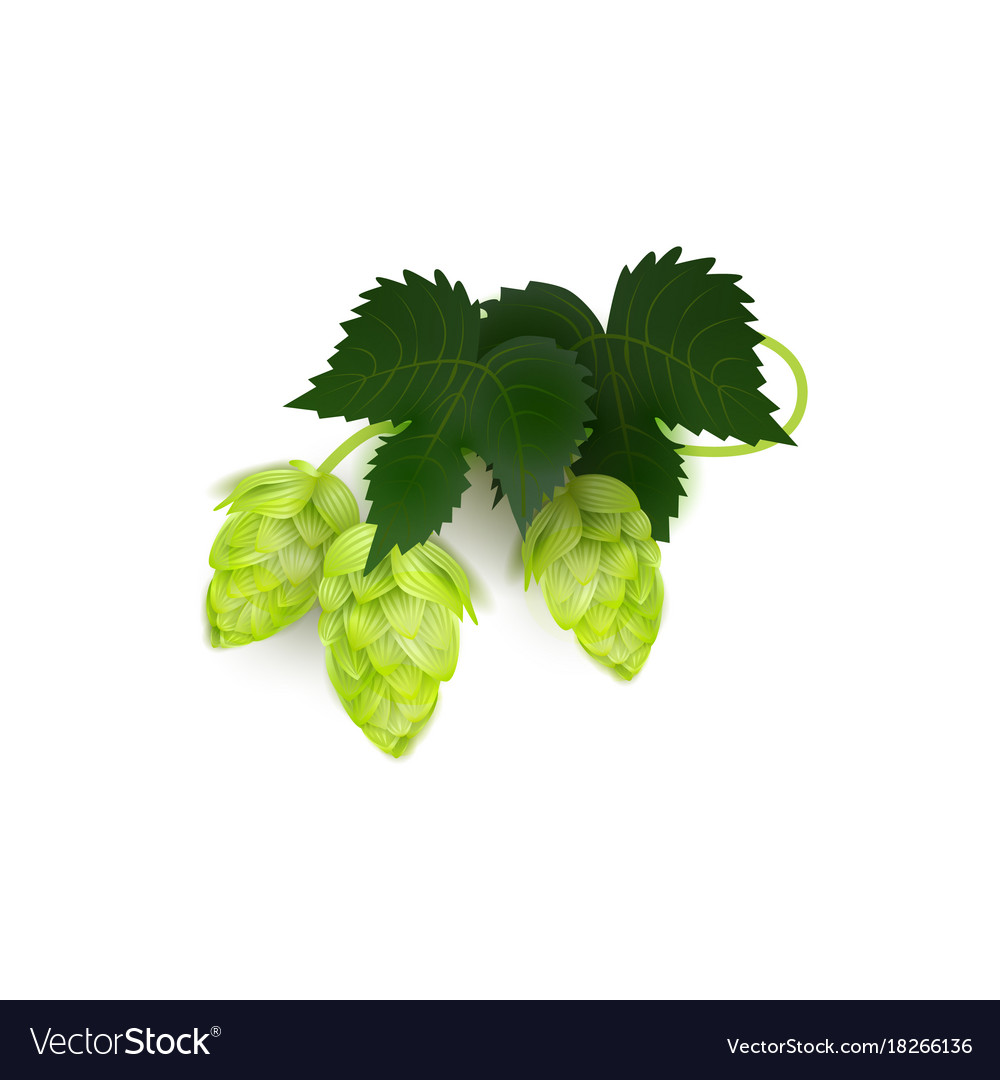 Green realistic beer hop cones with leaves