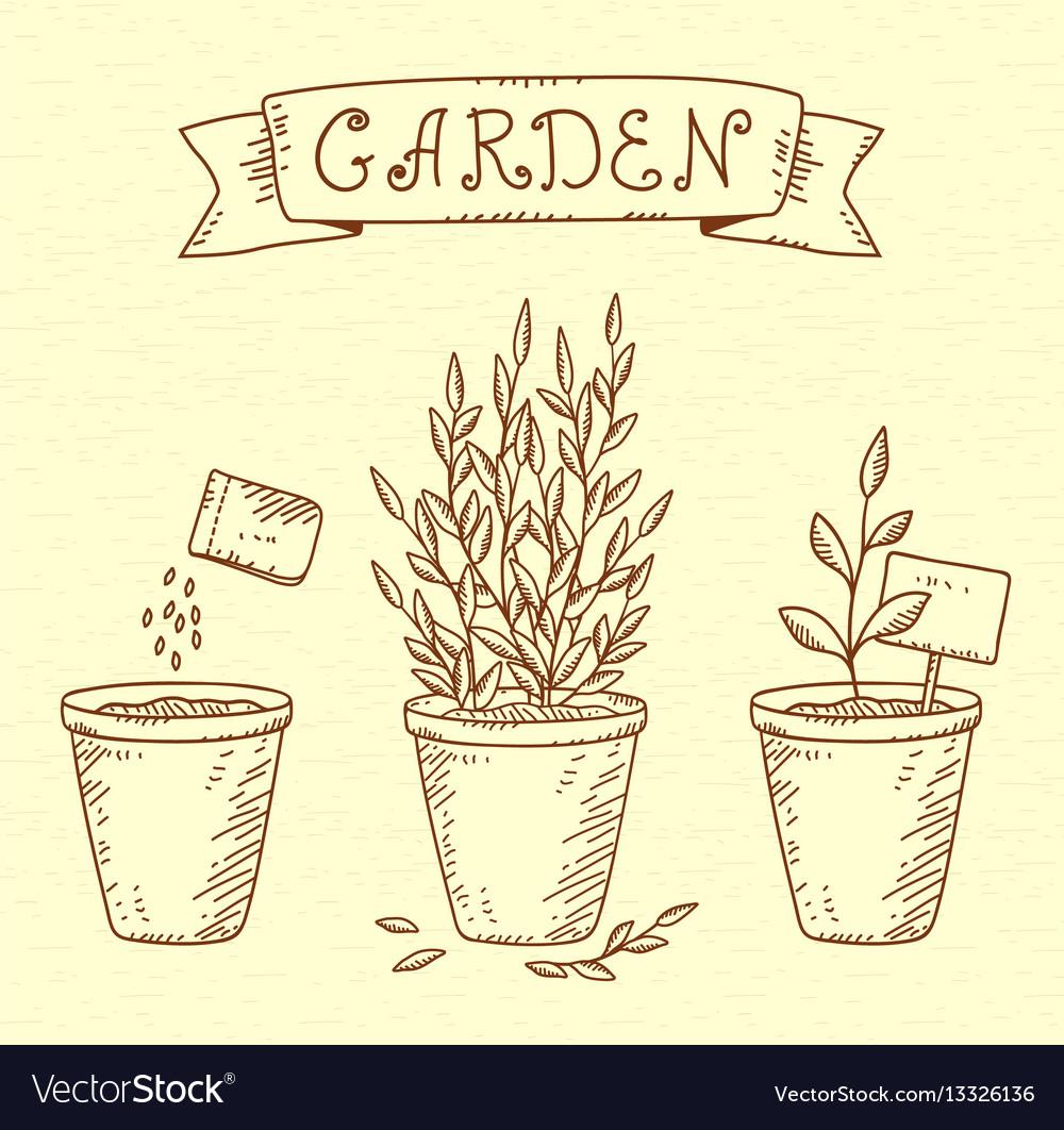 Plants in pots vector image