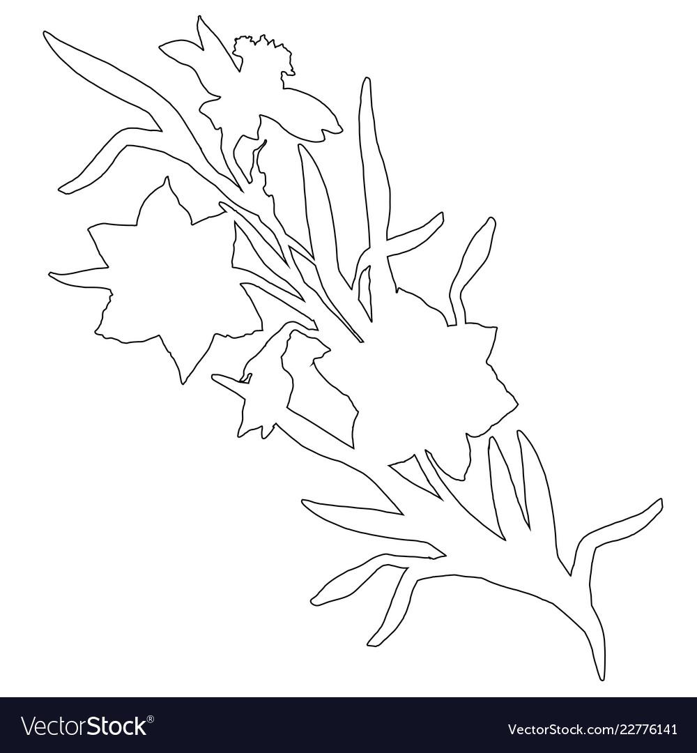 Botanical contour of hand drawn flowers daffodils