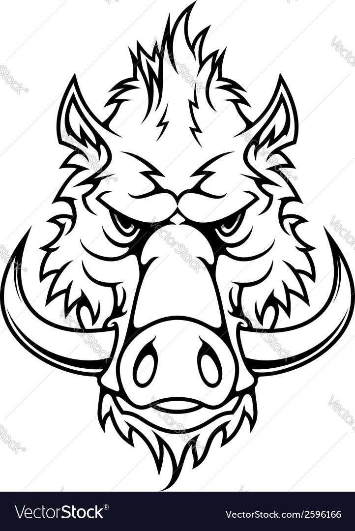 Head of a fierce wild boar