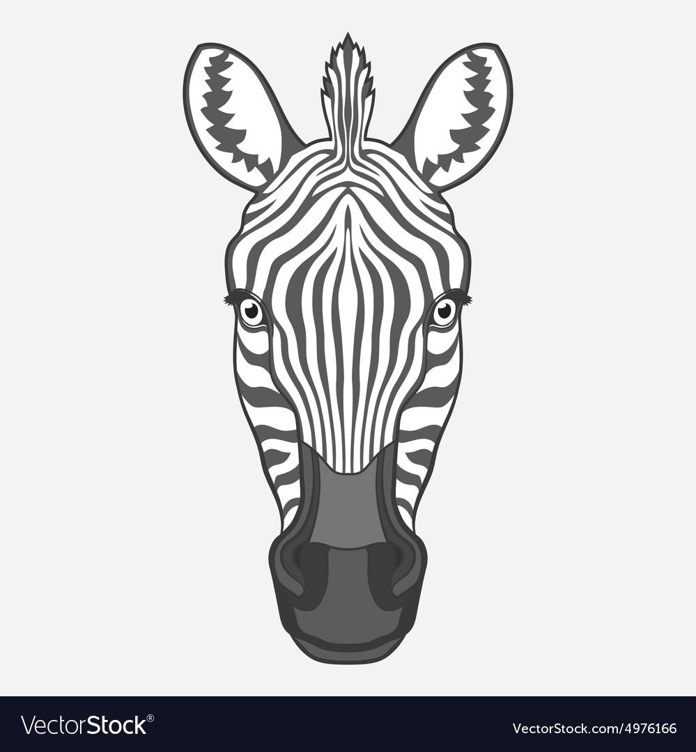 Zebra head Royalty Free Vector Image - VectorStock
